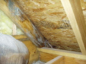 Black Mold In Attic E