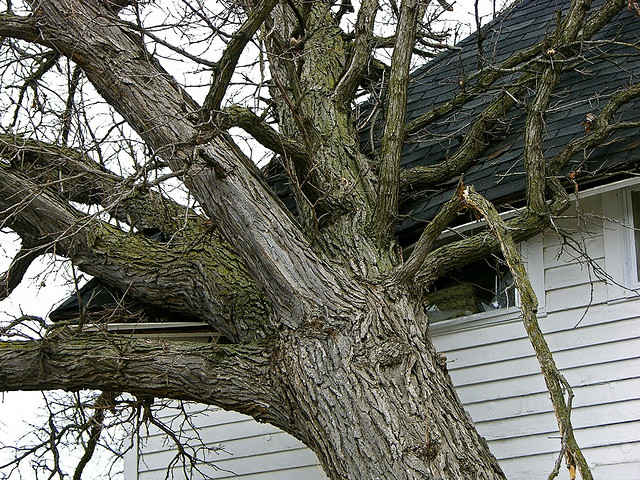 A picture of a tree fallen on a roof. The homeowner must now deal with insurance claims for roof damage.