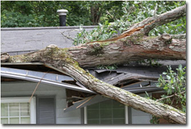 roof damage from fallen tree