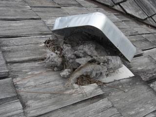 Look Overhead For Roof Vents For Dryers